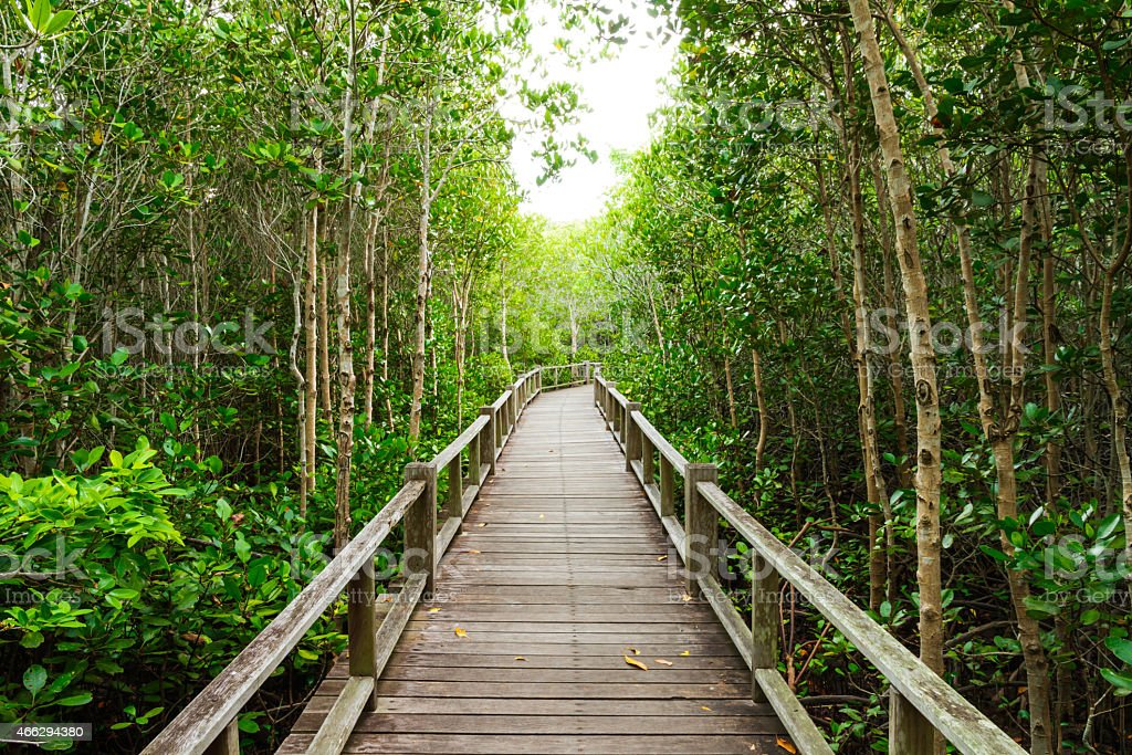 The forest mangrove. stock photo