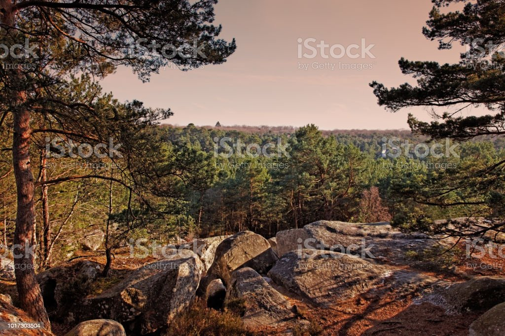 the forest of Fontainebleau Sunset in the forest of Fontainebleau in the early spring.This French forest is a national natural park wellknown for its boulders with various shapes and dimensions. It is the biggest and most developed bouldering (a specific style of  rock climbing) area in the world. Backgrounds Stock Photo