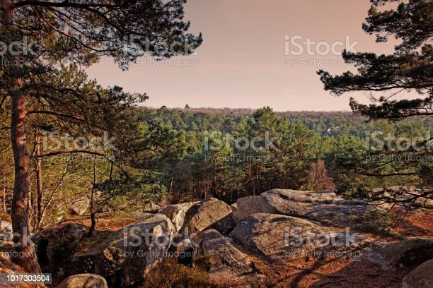 The Forest Of Fontainebleau Stock Photo - Download Image Now