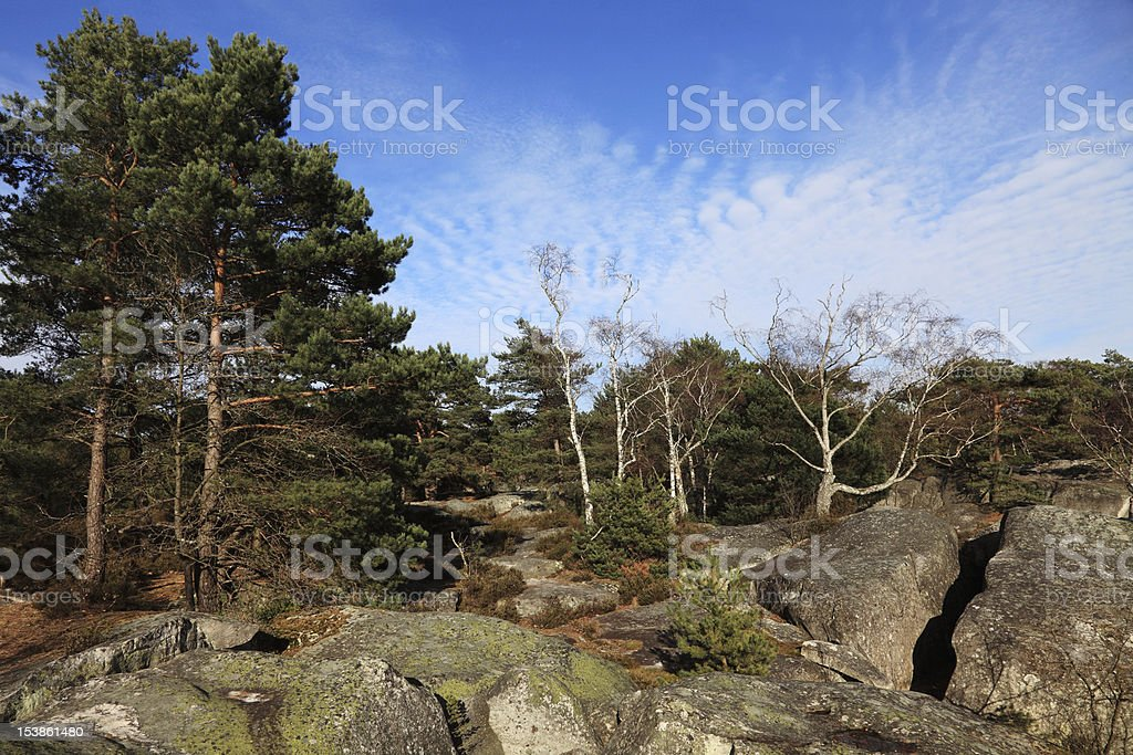 The forest of Fontainebleau stock photo