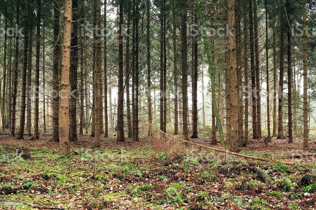 Der Wald Fotografie Stock E Altre Immagini Di Albero Istock