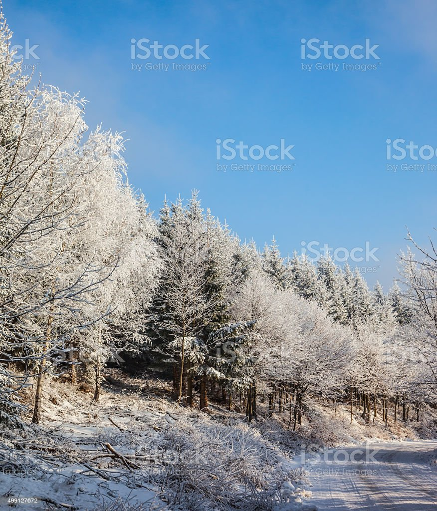 The forest road prepared for skiers stock photo
