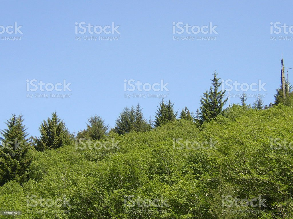 the  forest through some trees royalty-free stock photo