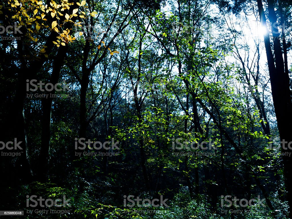 The forest where the morning sun shines ストックフォト