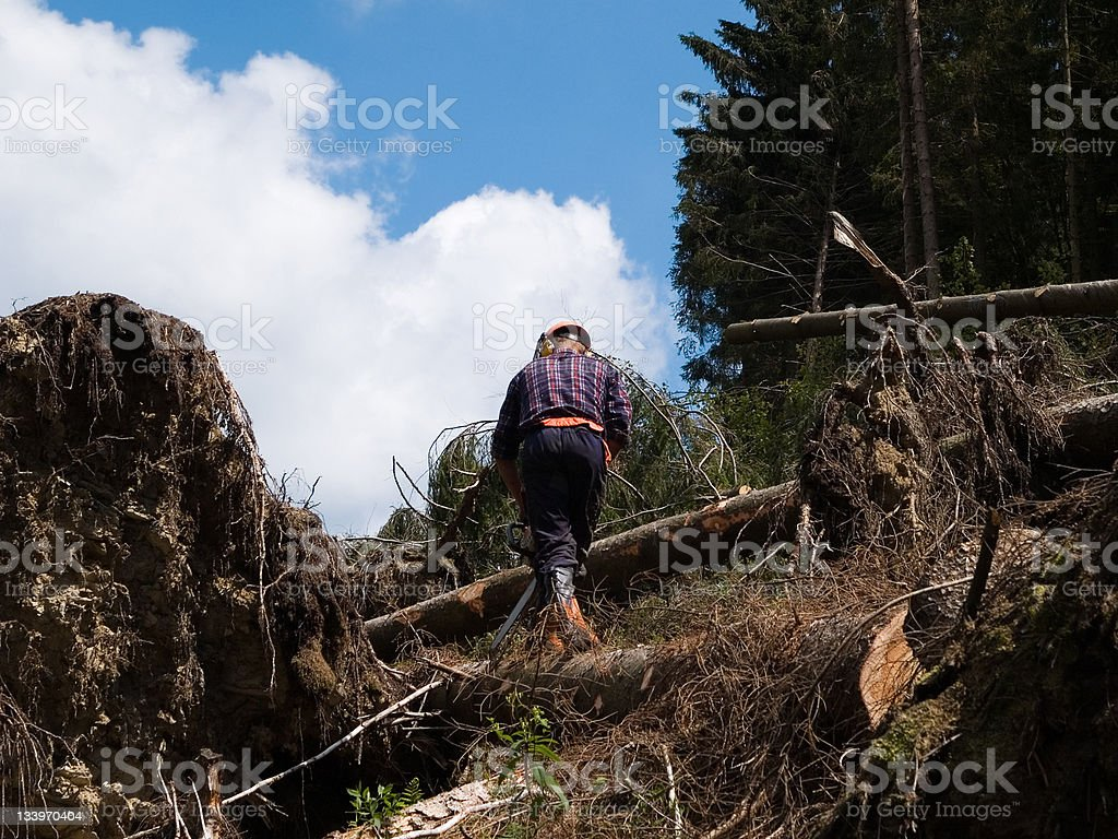 The forest worker royalty-free stock photo