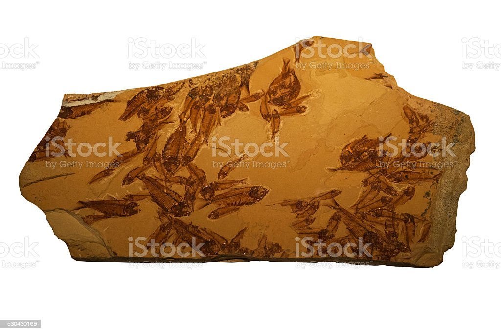 The Fossils of fish school in rock stock photo