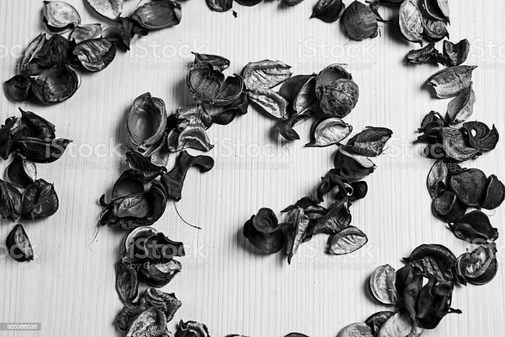 The frame of dried flowers black and white poster