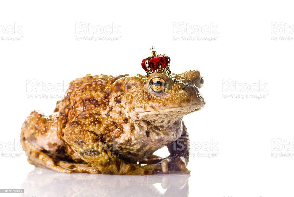 The frog prince stock photo