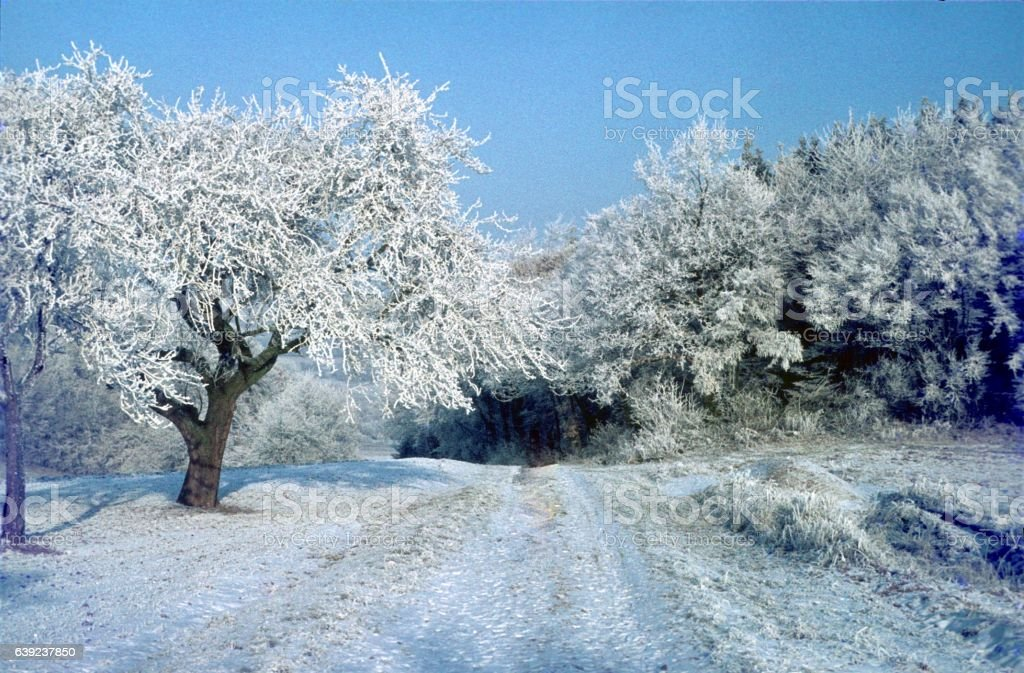 The frost has come IV. stock photo