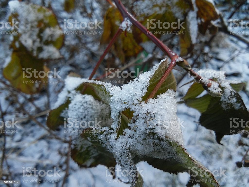 The frozen branch royalty-free stock photo