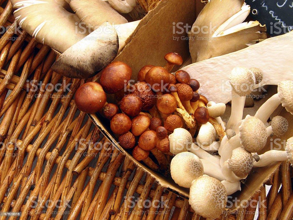 The fungi family royalty-free stock photo