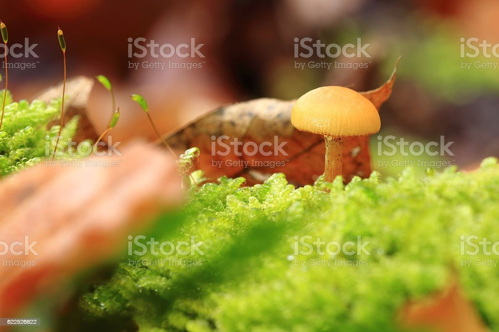 der Pilz stock photo