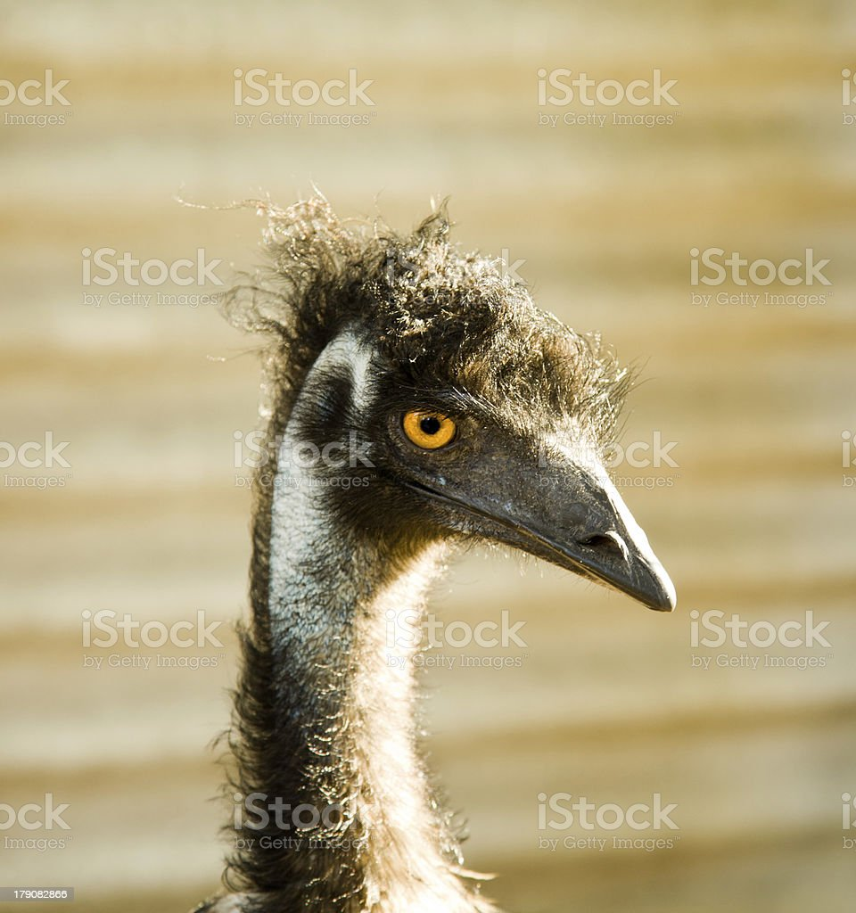 The funny ostrich royalty-free stock photo