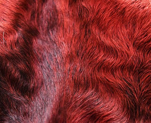 the fur is red karakul lambskin texture, background - lammfell stock-fotos und bilder