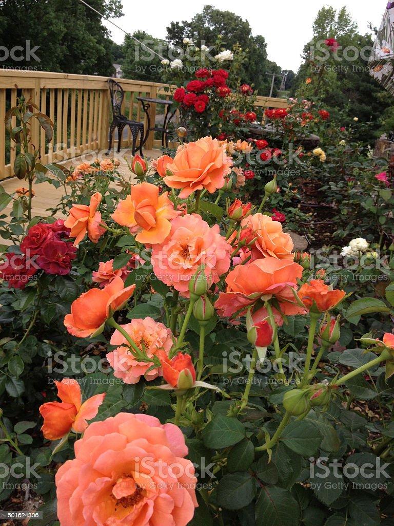 'The Garden Last Night stock photo