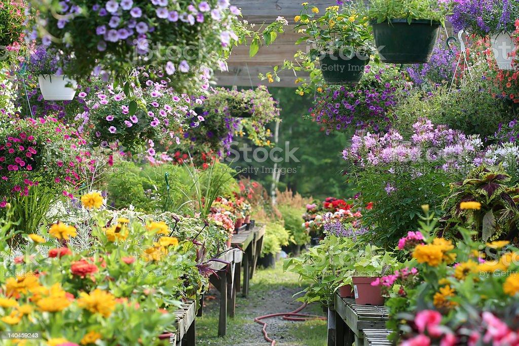 The Garden royalty-free stock photo