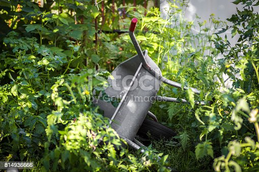 istock The garden trolley 814936666