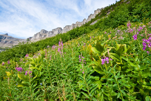Wildflowers Under The Garden Wall Stock Photo - Download Image Now