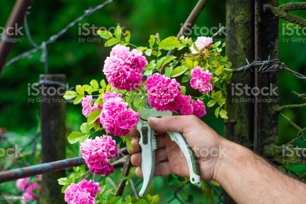 Taking care of the garden, collecting flowers.