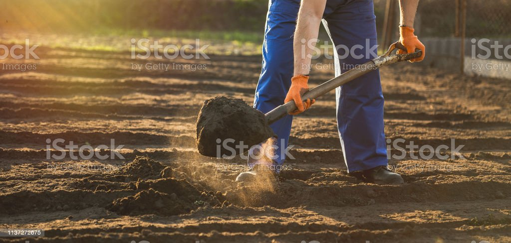 Portrait of a smiling man gardening in his garden, on a lovely spring...