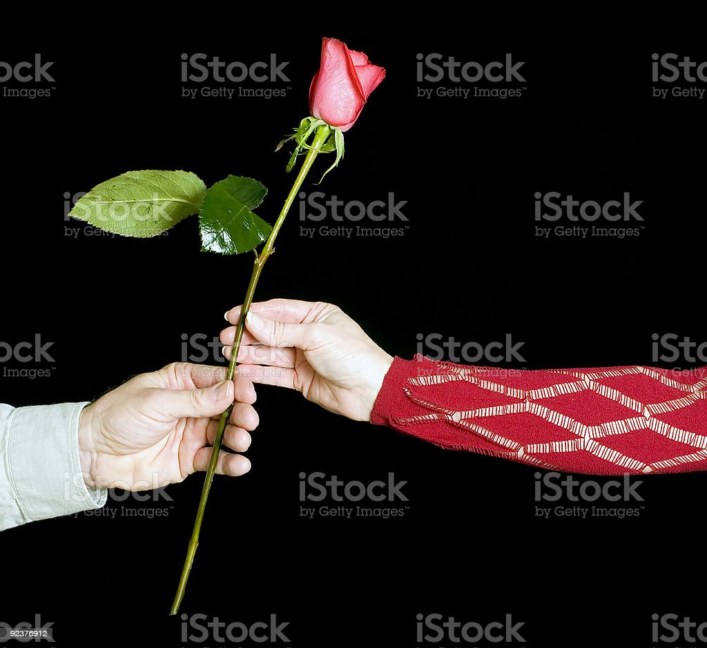 The gift of roses royalty-free stock photo