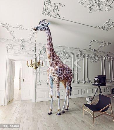 istock the giraffe hold the chandelier 866154460