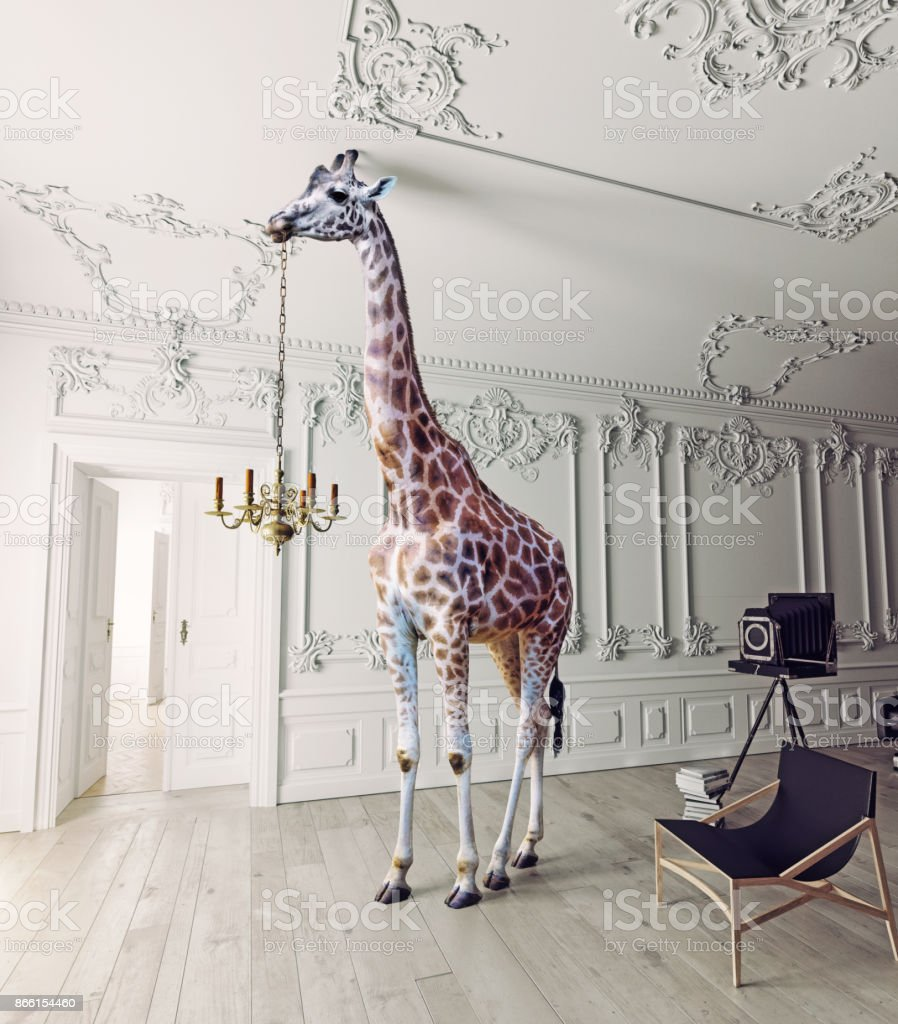 the giraffe hold the chandelier stock photo