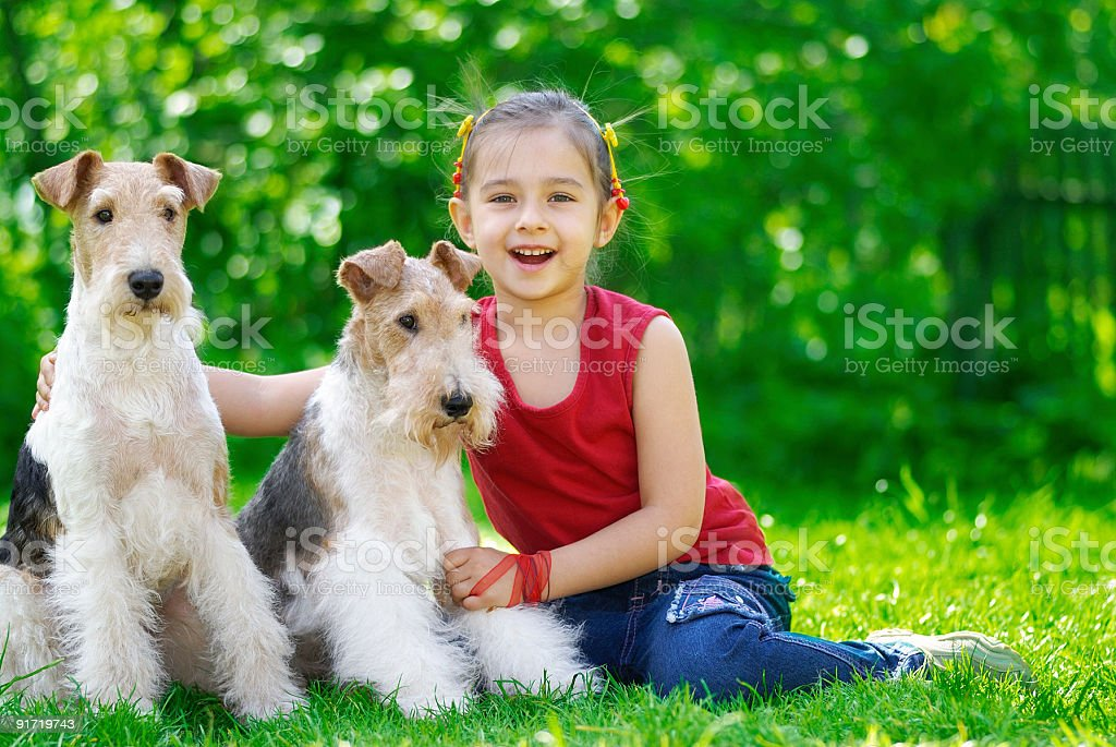 The girl and two fox terriers royalty-free stock photo