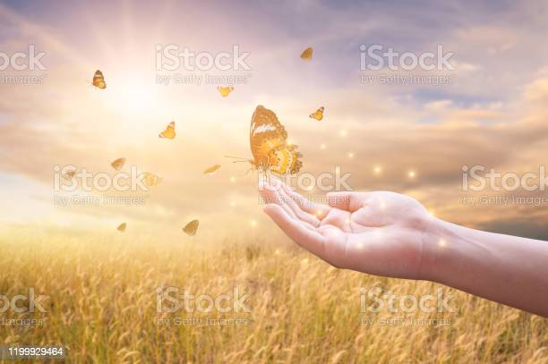 The girl frees the butterfly from the jar golden blue moment concept picture id1199929464?b=1&k=6&m=1199929464&s=612x612&h=ubsziln6lxxroxssi xzbjmtoh7tkihy834b5ywhzqq=