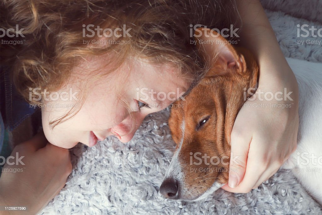 The girl hugs the basenji dog. royalty-free stock photo