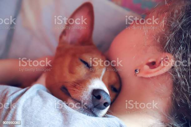 The girl hugs the basenji dog toned close up picture id905990080?b=1&k=6&m=905990080&s=612x612&h=pdp6eu52ze76wmir3y3pb2c4azc9l 6na7uymibayk4=