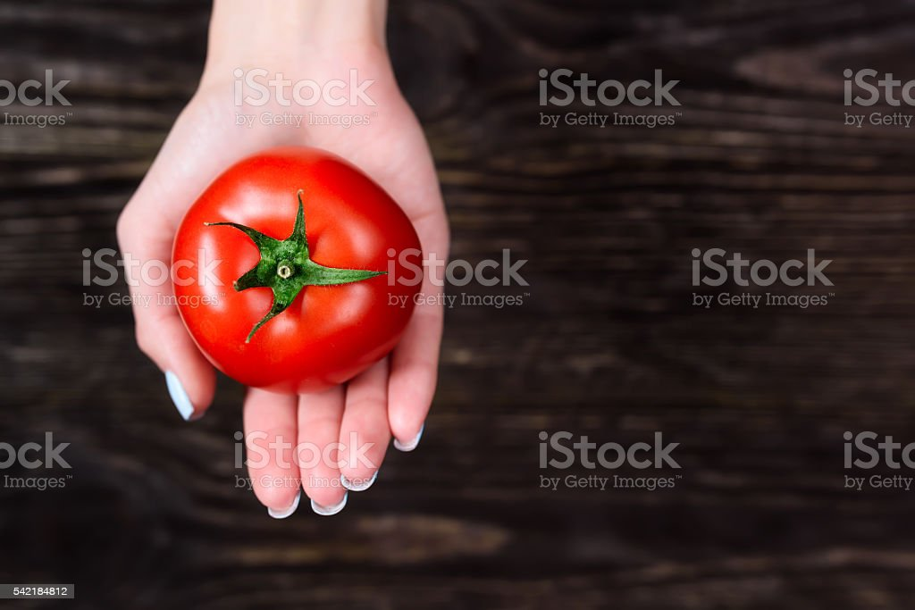 The girl in the hands holding a tomato stock photo