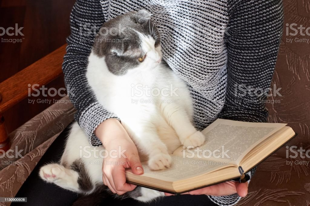 The girl is reading a book and holding a cute big cat