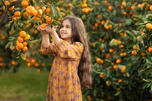 The girl stands in the garden with tangerines and prepares to harvest a ripe harvest.