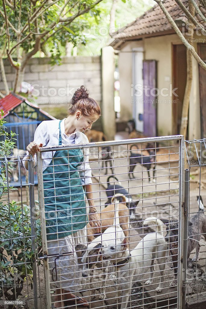 The girl with the dogs stock photo