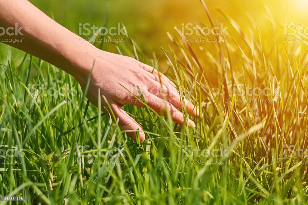 the girl's hand stroking the green grass foto stock royalty-free
