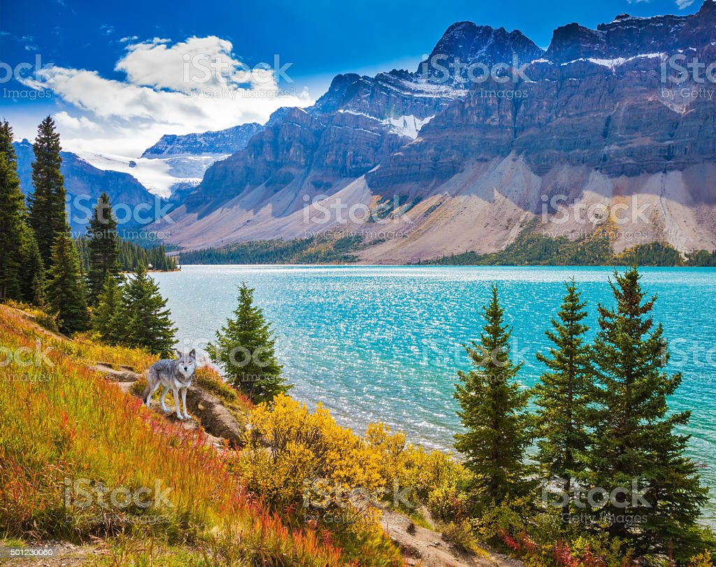 The glacial Bow Lake with emerald green water stock photo