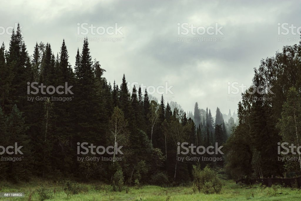 The gloomy atmosphere of the evening in the dark forest. royalty-free stock photo