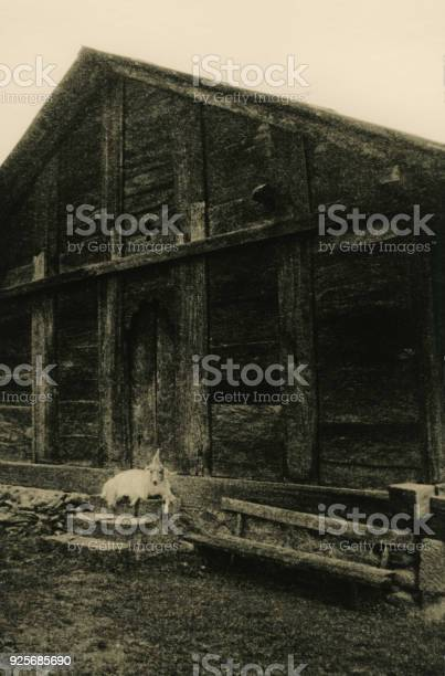 The goat lies on the steps of the wooden house.