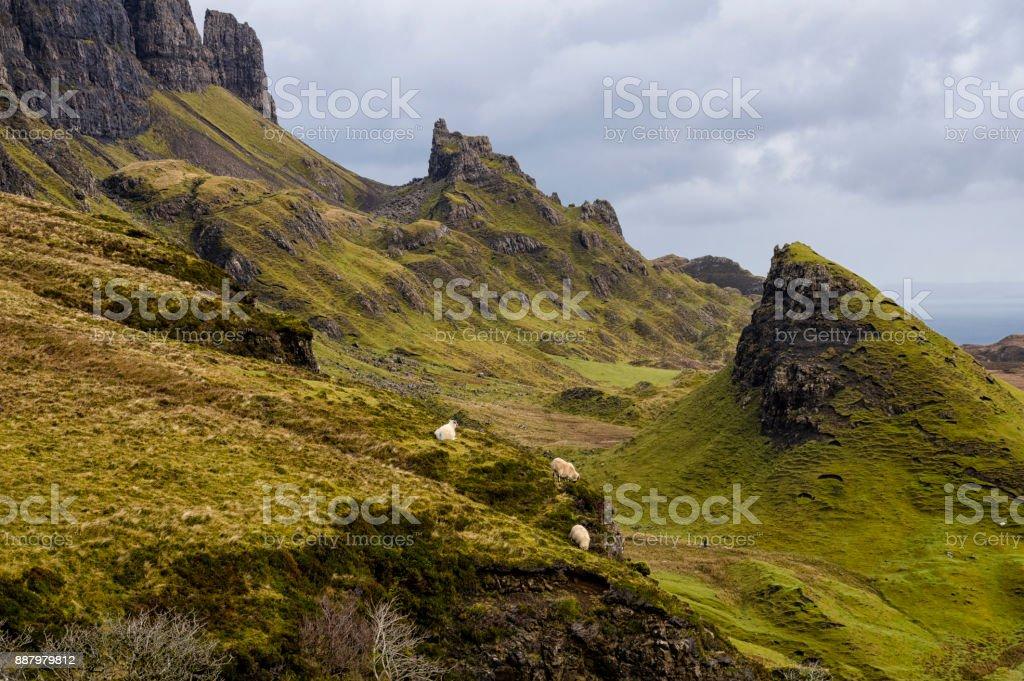 Skye keçi stok fotoğrafı