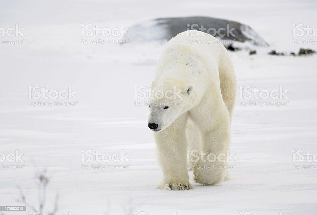 The goingon snow royalty-free stock photo