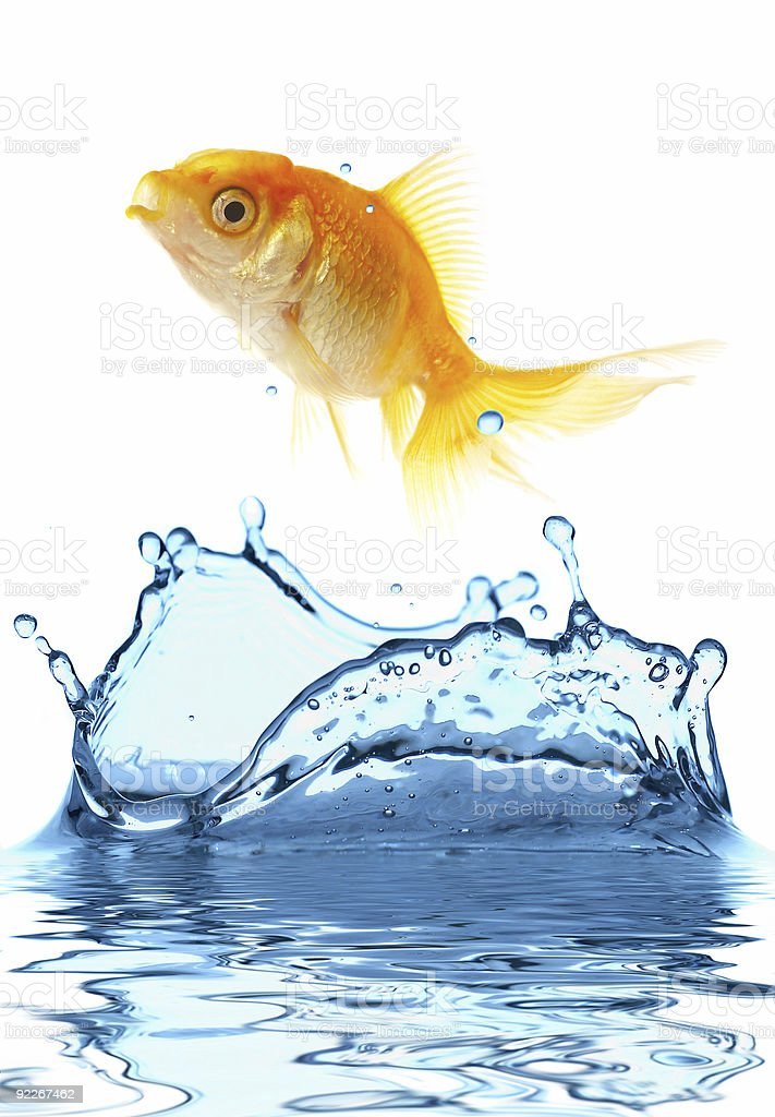 The gold small fish stock photo