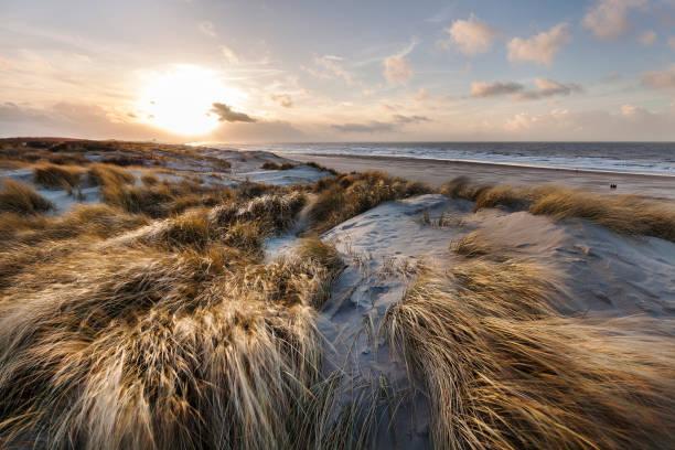 scheveningen의 황금 모래 언덕 - 사구 지형 뉴스 사진 이미지