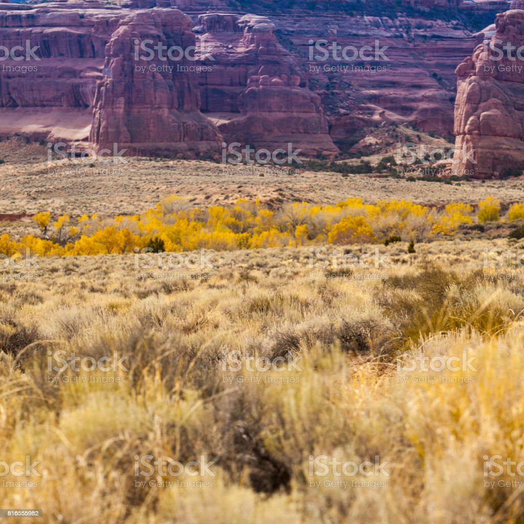The golden fall in the desert. Colorful autumn's foliage on the bush. The scenic view of the Arches National Park, Utah. stock photo