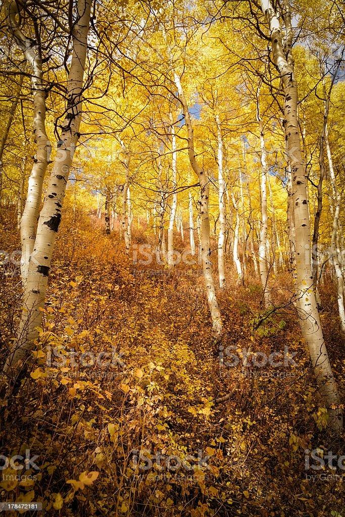 The Golden Hidden Trail stock photo