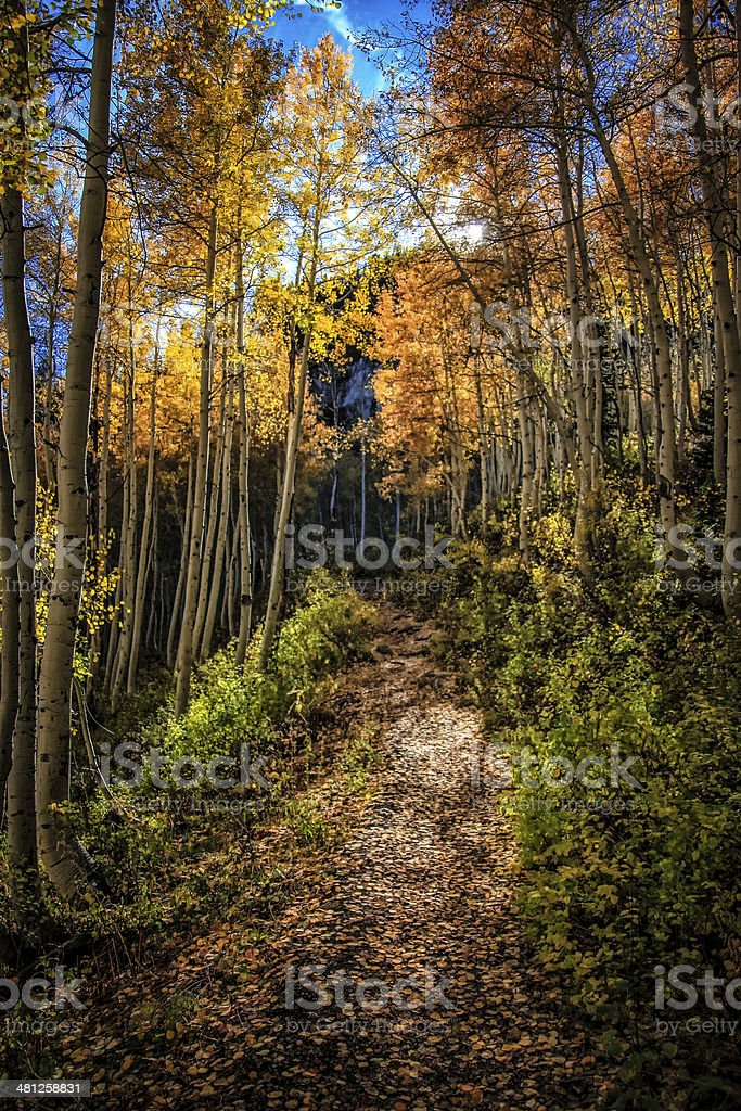 The Golden Leaf Trail stock photo