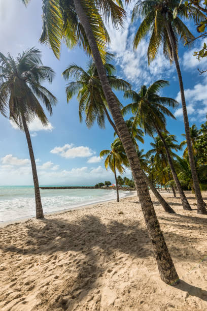 the Gosier in Guadeloupe stock photo