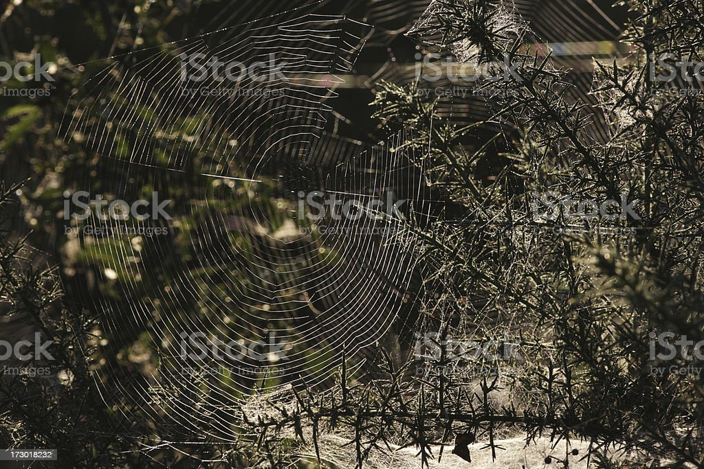 Webs spiders and mites give gossamer delights stock photo