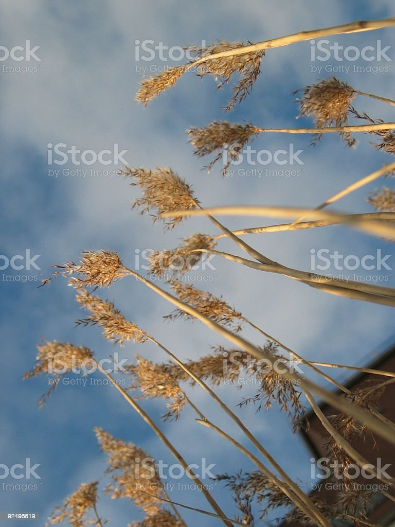the grass has grown royalty-free stock photo