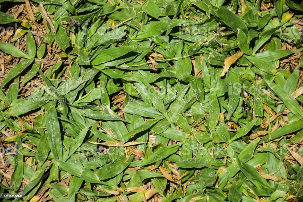 The grass in summer Background - Royalty-free Abstract Stock Photo